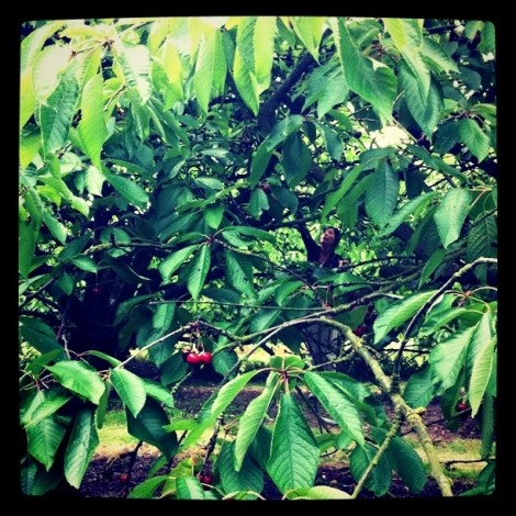 Cherry picking with @monmargot...
